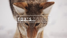 Fox YouTube banner