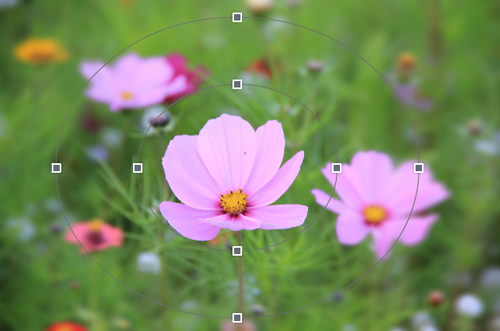 Blur Images Blur Your Photos With Online Blurring Tool Fotojet