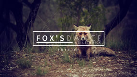 Little Fox YouTube Channel Art