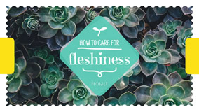 Care for fleshiness YouTube
