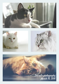 Cats photo grid