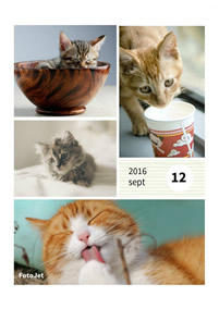 Baby cats collage