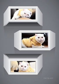 3D cat collage