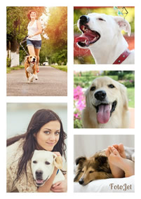 Dog photo grid