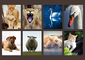 Animal movie collage