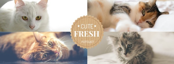 Cat Facebook Cover Photo Template