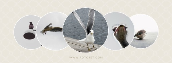 Cute Bird Facebook Cover Photo Template