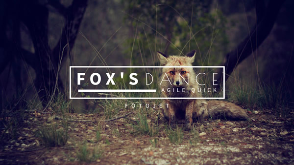 Little Fox YouTube Channel Art Template